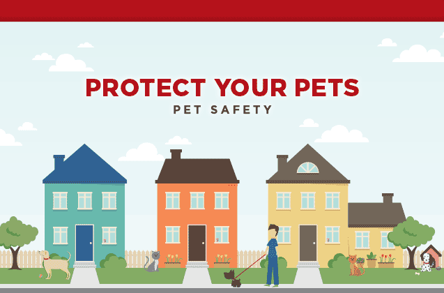 Protect Your Pets: Pet Safety
